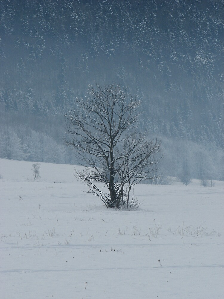 Lonely tree by jerincsson