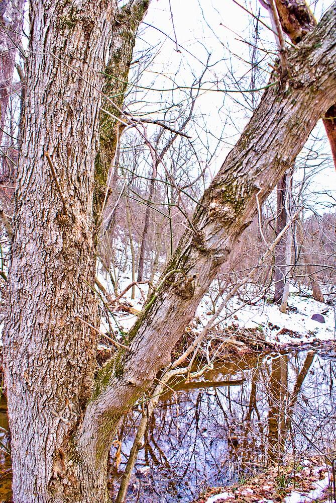 Winter Walk #3 by Rod  Adams