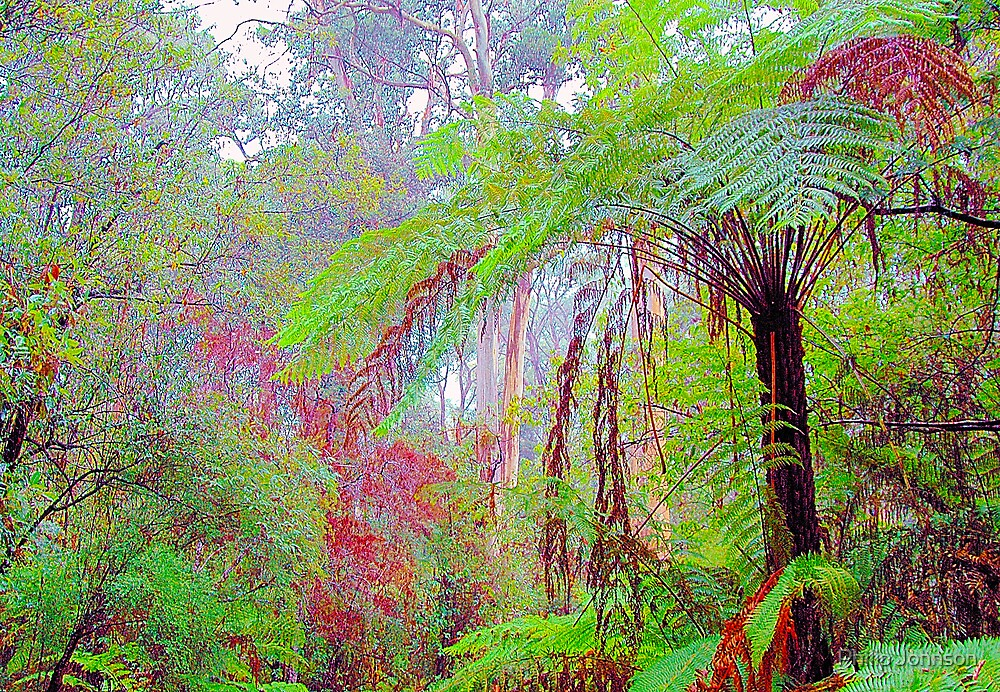 Colours of the Forrest - Marysville , Yarra Ranges National Park Victoria Australia by Philip Johnson