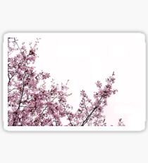 Blossoms Sticker