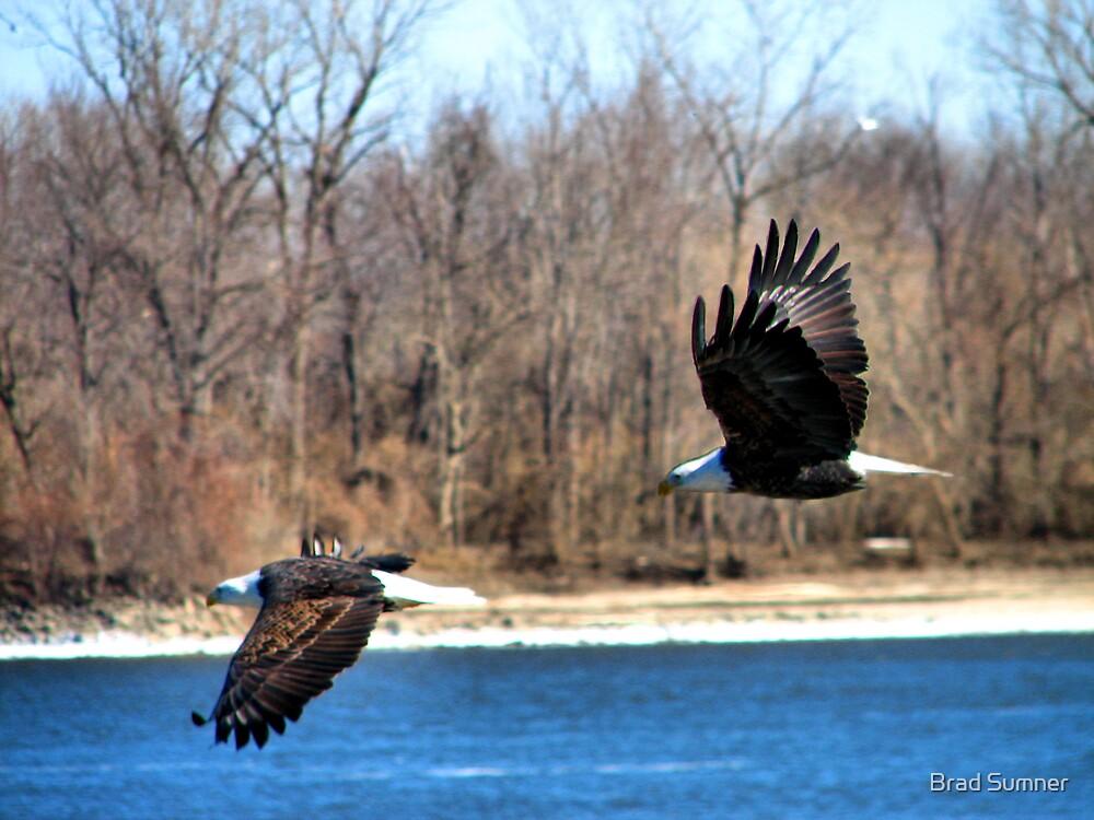 Eagles in Flight by Brad Sumner