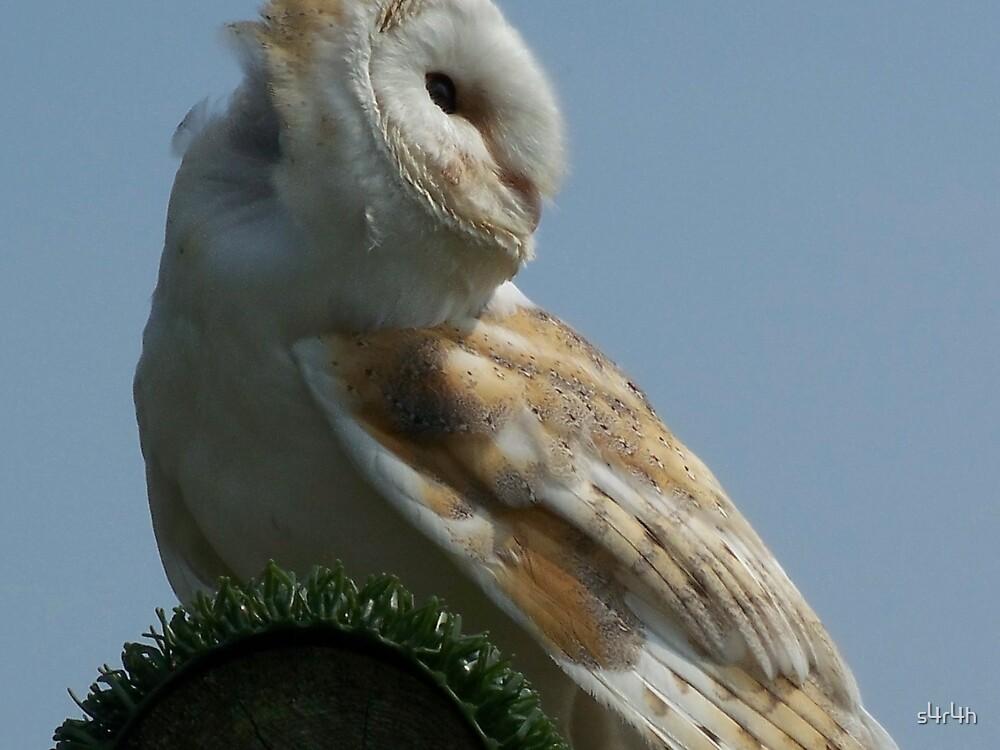 Barn Owl by s4r4h