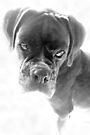Sie sagen mir, dass ich nicht länger ein Welpe bin - Boxer Dogs Series von Evita