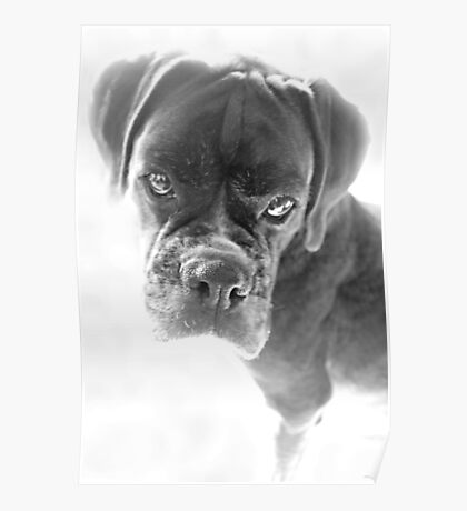 Sie sagen mir, dass ich nicht länger ein Welpe bin - Boxer Dogs Series Poster
