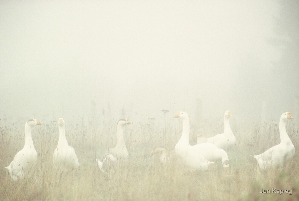 foggy geese by KepJer64