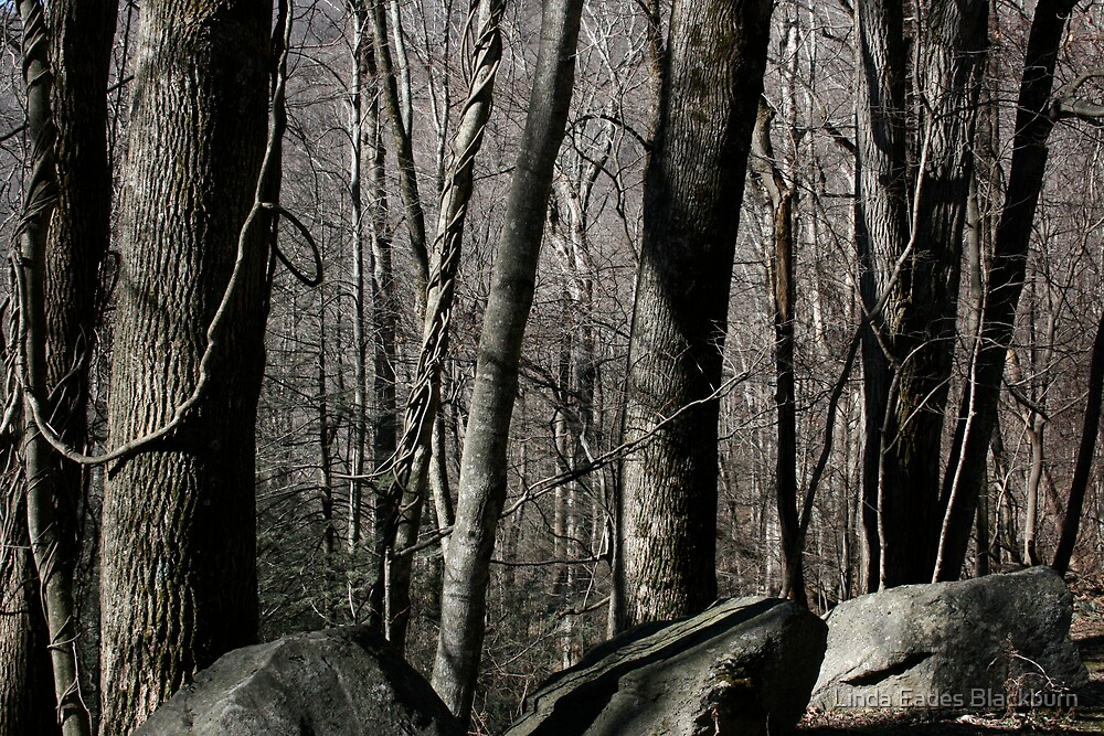 Winter Wood by Linda Eades Blackburn