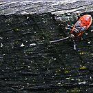 Ladybug by Sara Lamond