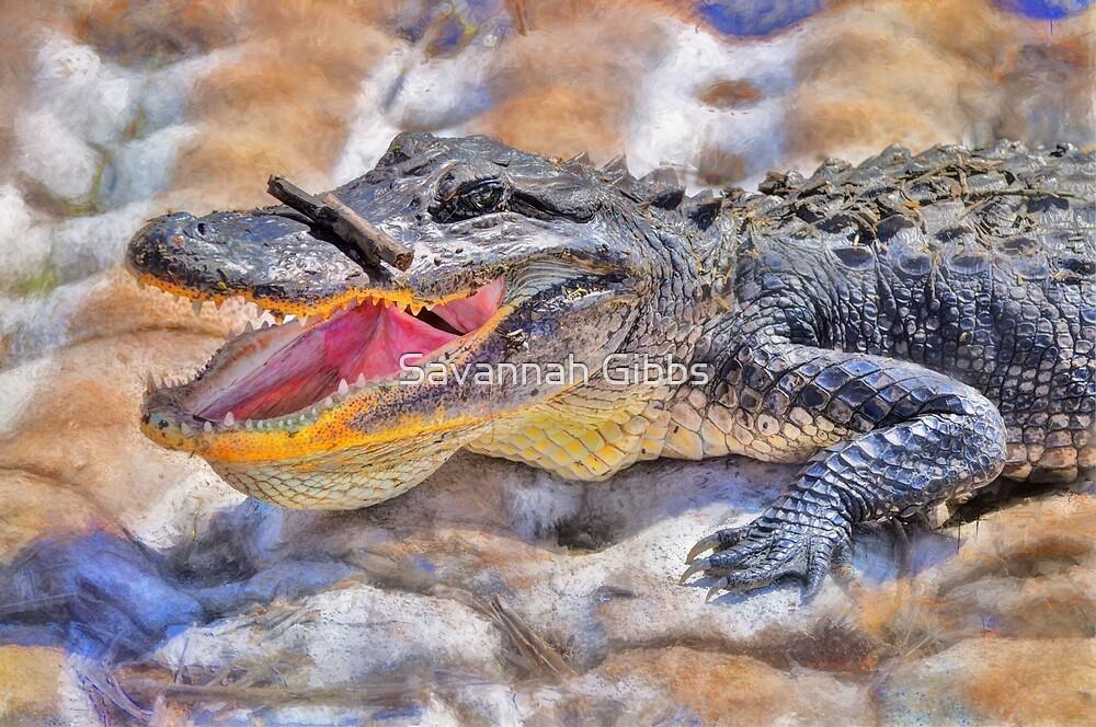 Alligator by S Gibbs