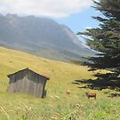 Mt Roland by Rob Watt