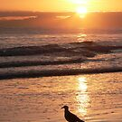 Lonely Gull by Rob Watt