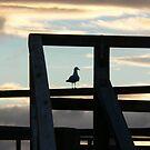 Seagull by Rob Watt
