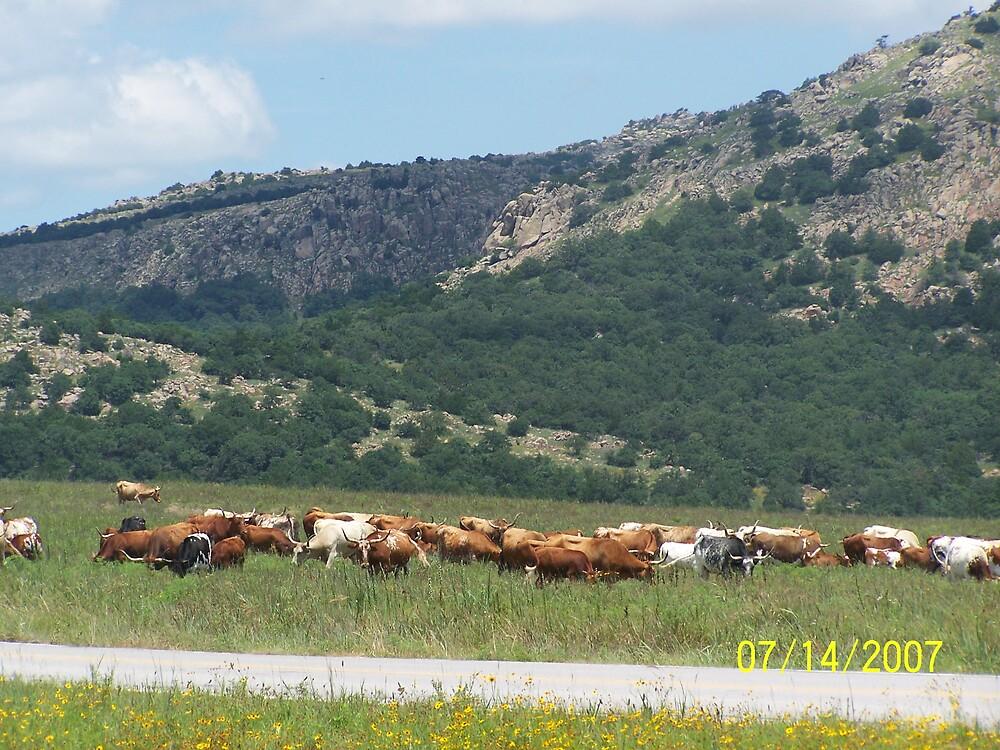 Longhorns by kostic