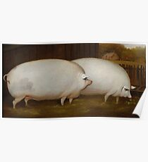 A Pair of Pigs Poster