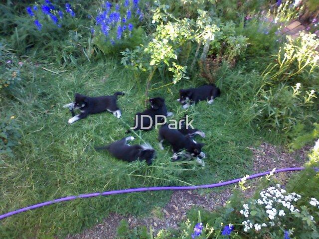 Garden Fun by JDPark