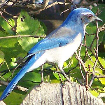 Tru~Blue by Auzriell