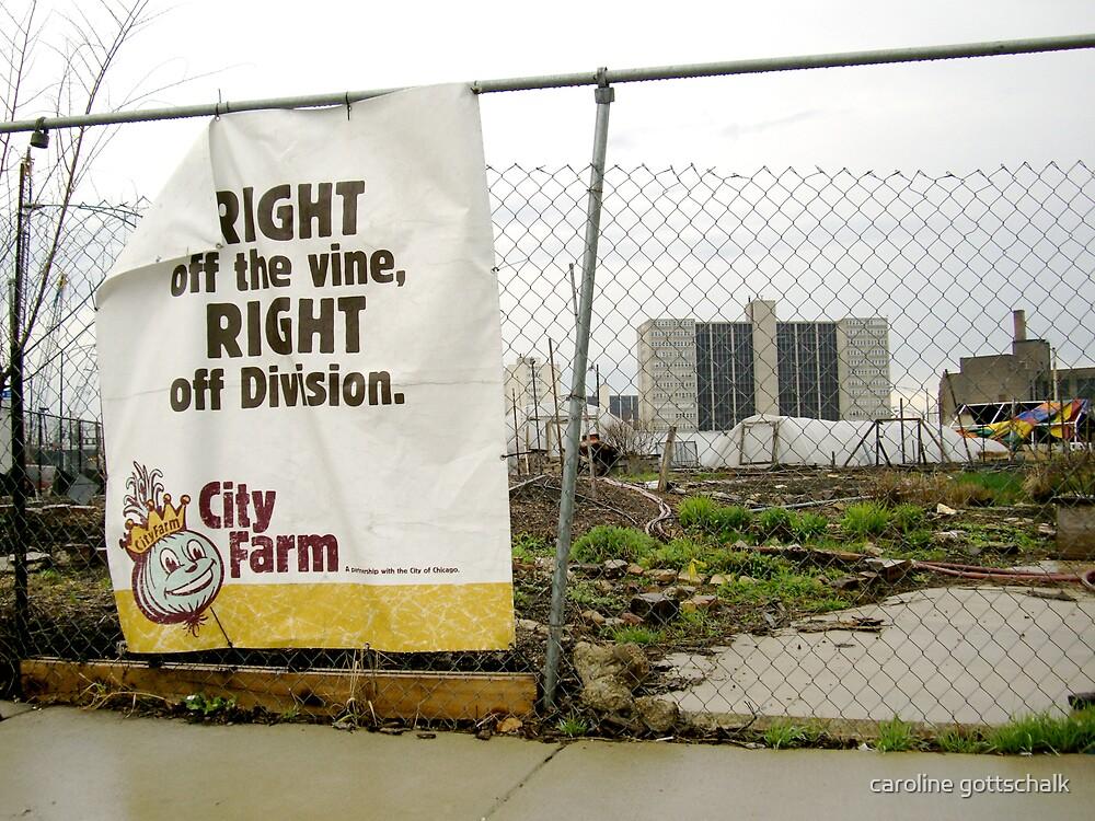 city farm. by caroline gottschalk