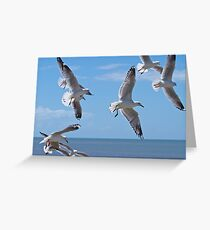Hovering seagulls  Greeting Card