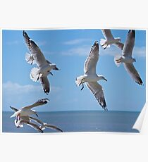 Hovering seagulls  Poster