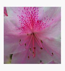 pink bloom Photographic Print