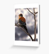 American Kestrel - Farmington Bay, Utah Greeting Card