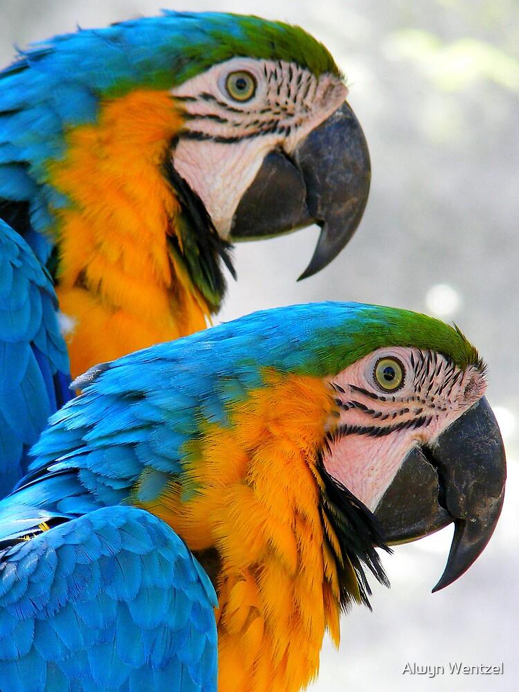 """2 """"LITTLE"""" Tikky Birds by Alwyn Wentzel"""