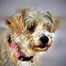 Doggie by Savannah Gibbs