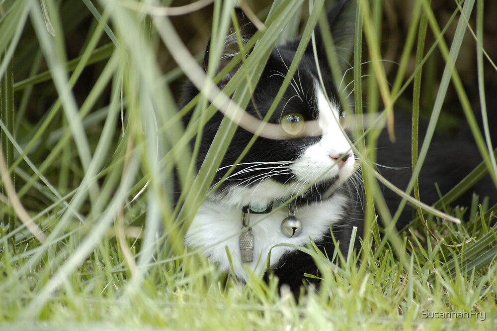Cat hiding behind Pampas leaves. by SusannahFry