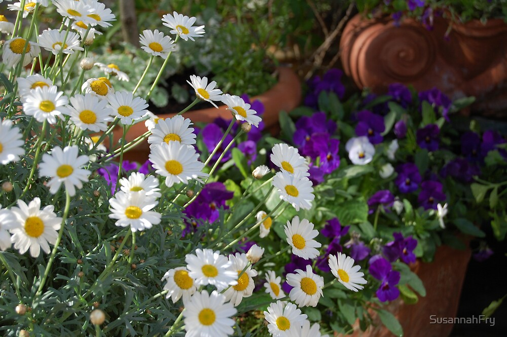 Daisies and pansies by SusannahFry