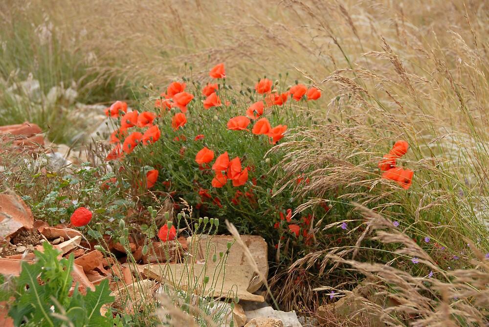 Wild Flowers by jensNP