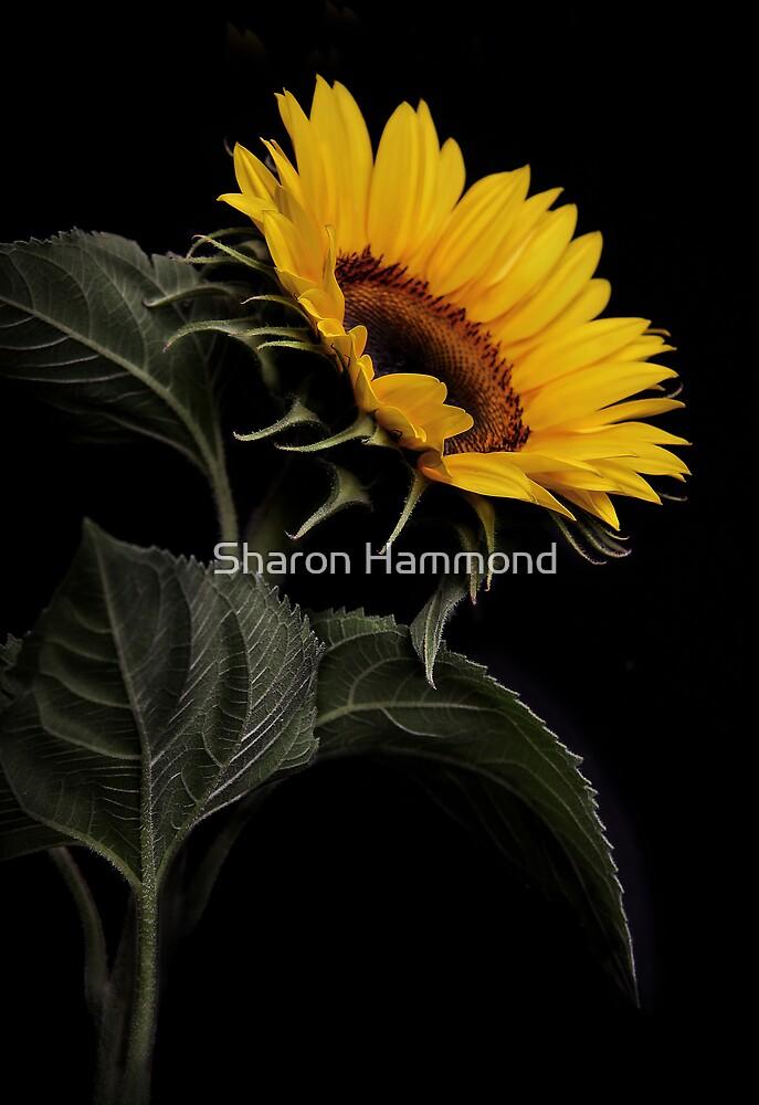 Shady Character by Sharon Hammond