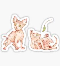 Sphinx Hairless Kitten Stickers | Redbubble