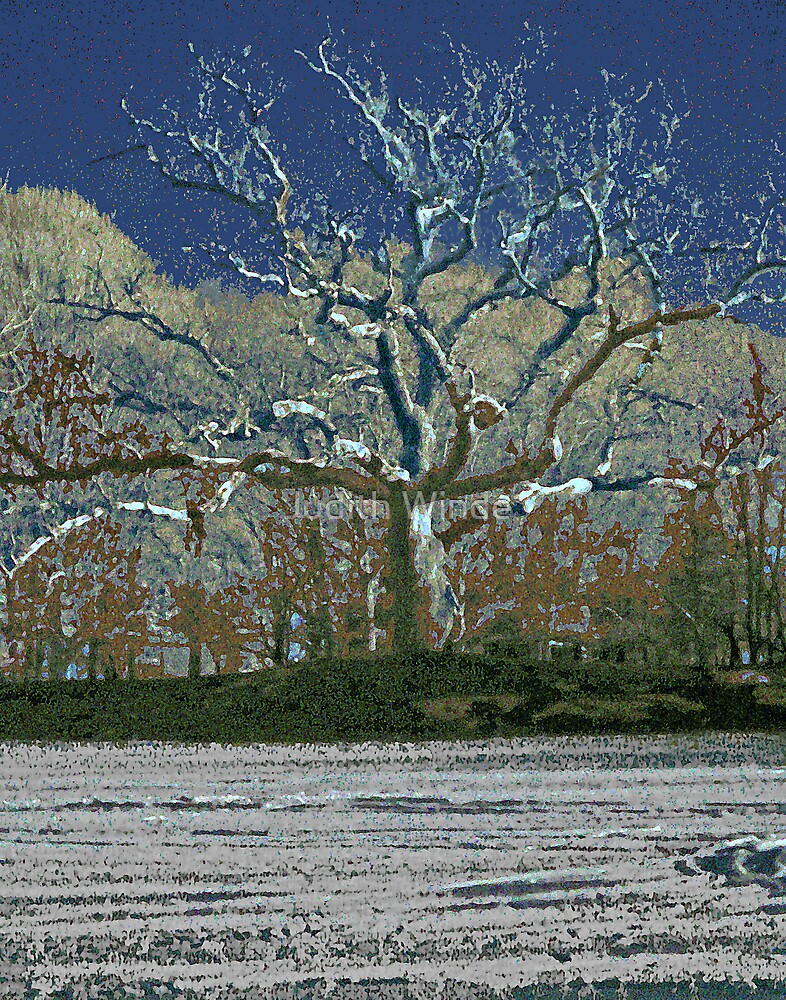 Winter Tree Revisited by Judith Winde