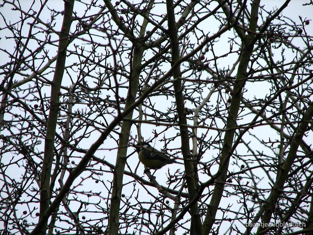 spot the bird. by daantjedubbledutch