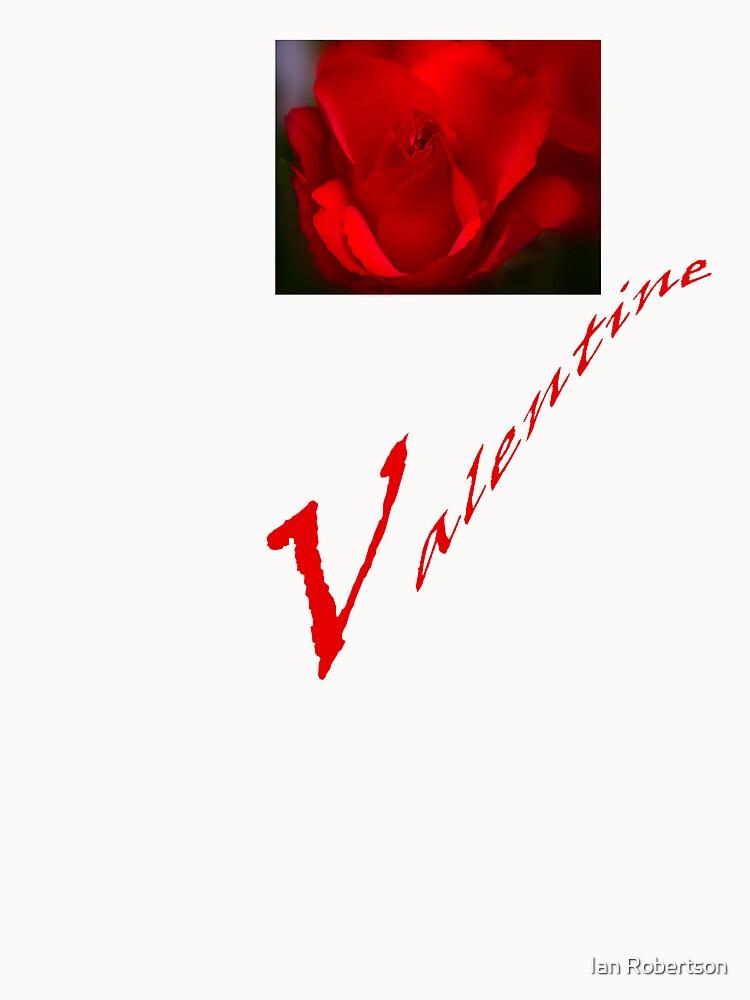 Valentine rose by Ian Robertson
