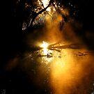 Golden Mist.... by GerryMac