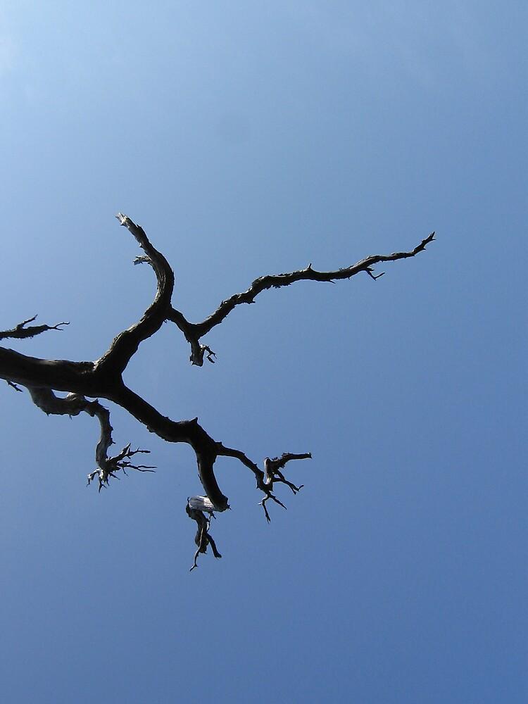 Burnt Pine by Richard  Bracken