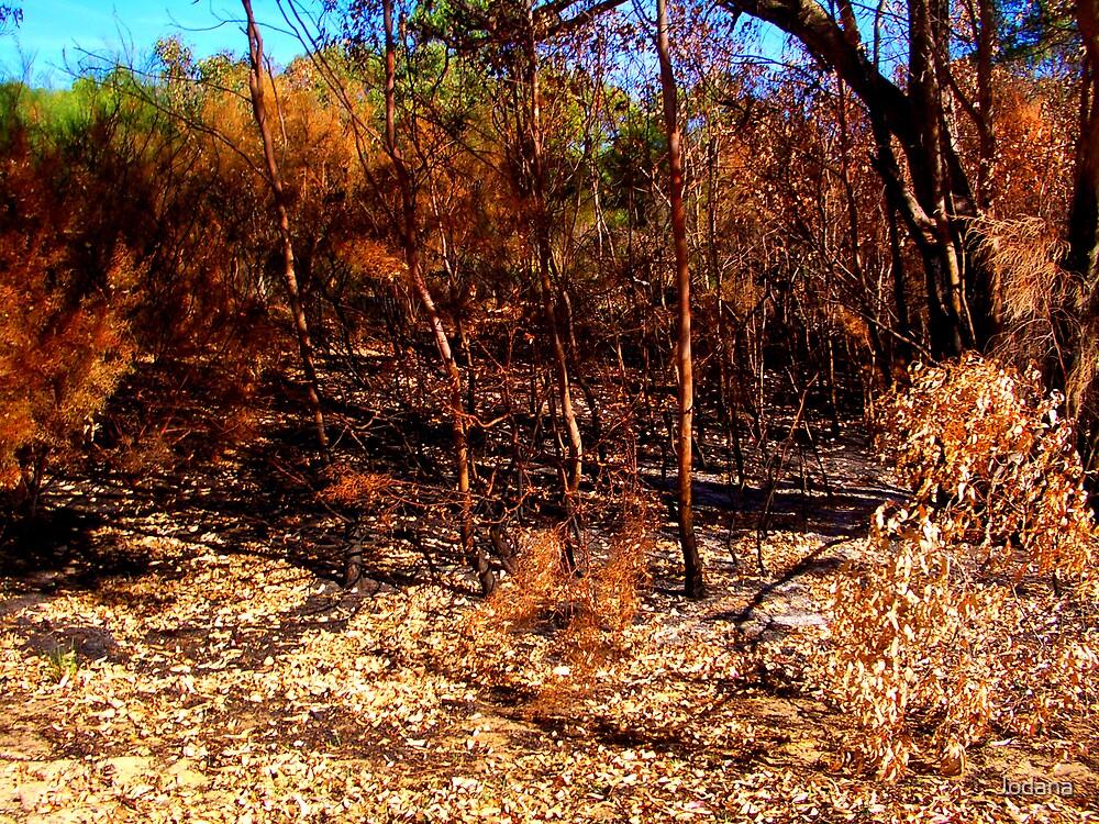 Bushland by Jodana