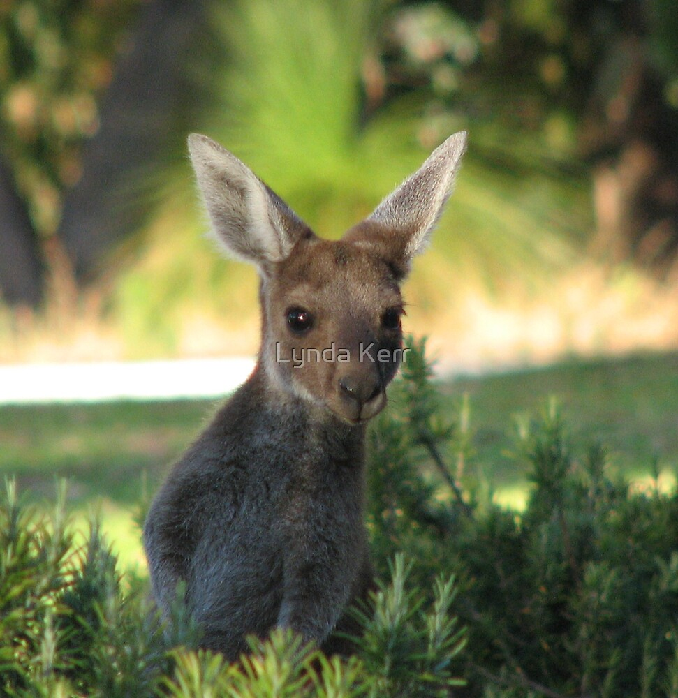 Curious Joey by Lynda Kerr