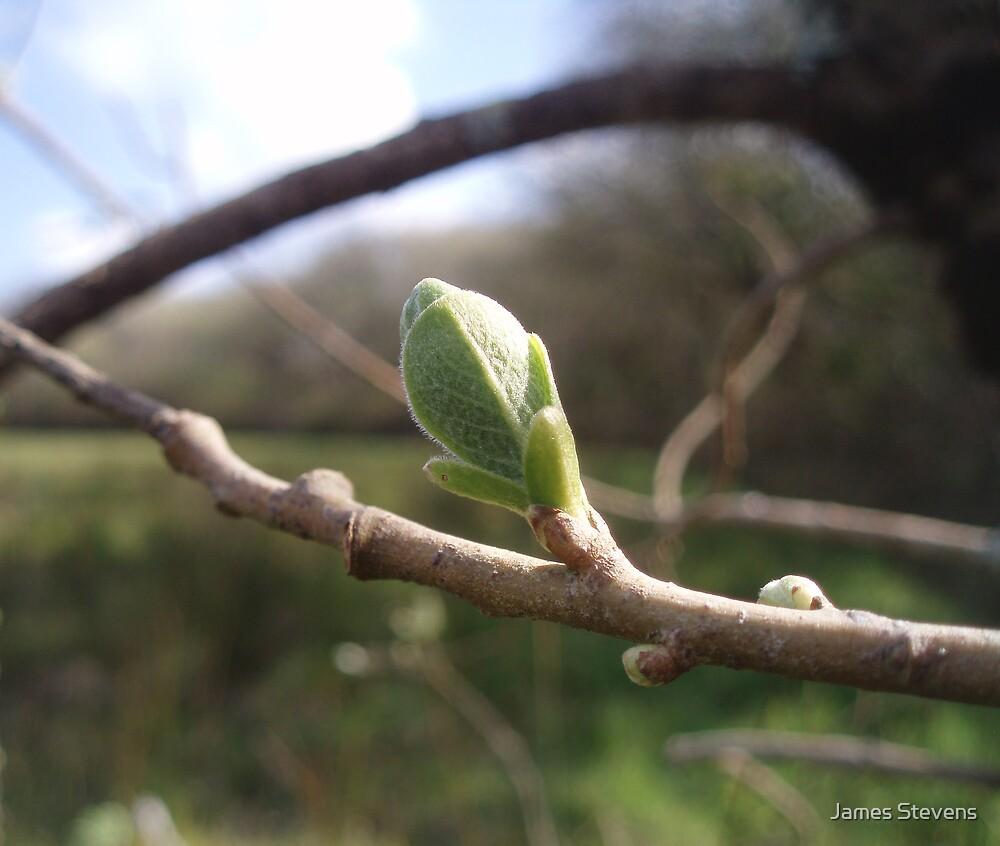 The Leaf Bud by James Stevens