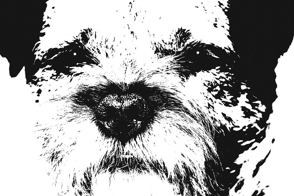 Border terrier by Bev Evans