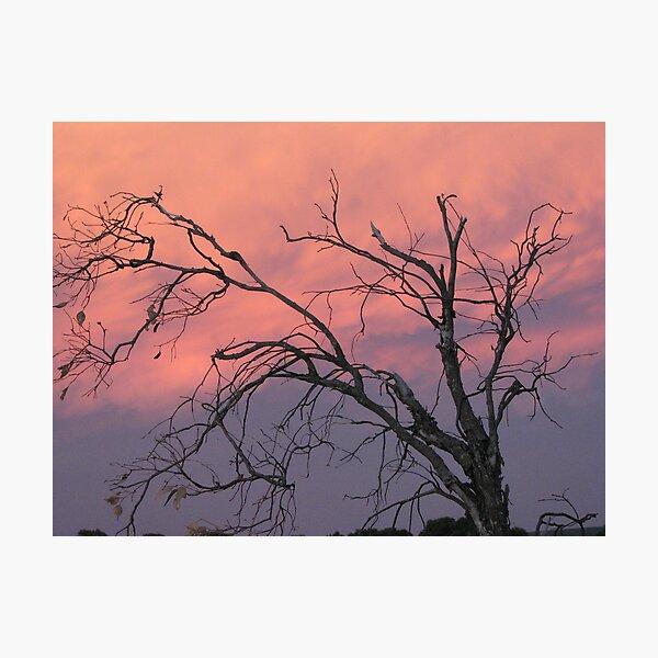 Twilight Tree Photographic Print