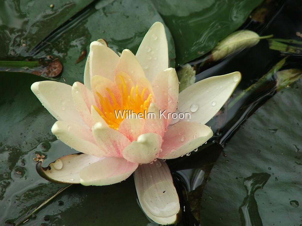 Lily by Wilhelm Kroon