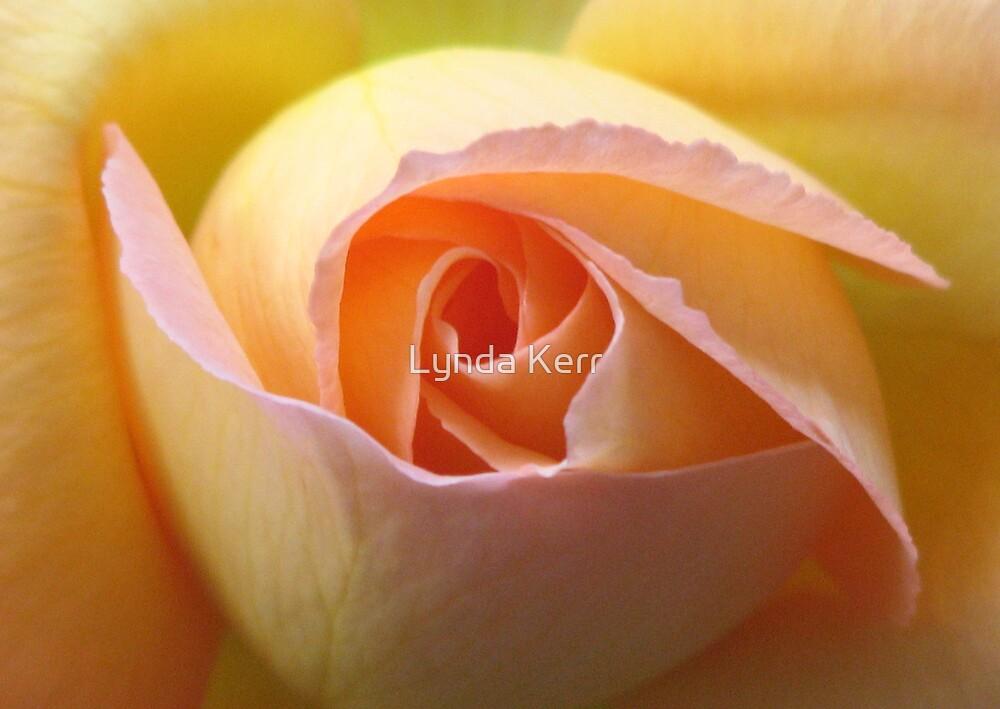 Rose  by Lynda Kerr