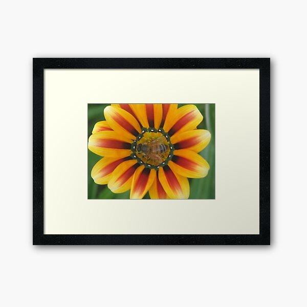 Bee Happy ! Framed Art Print