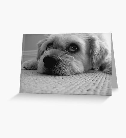 If I smile, will you walk me...... Greeting Card