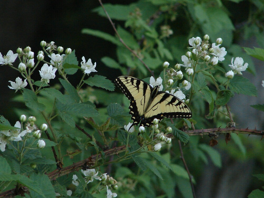 Butterfly by inventor
