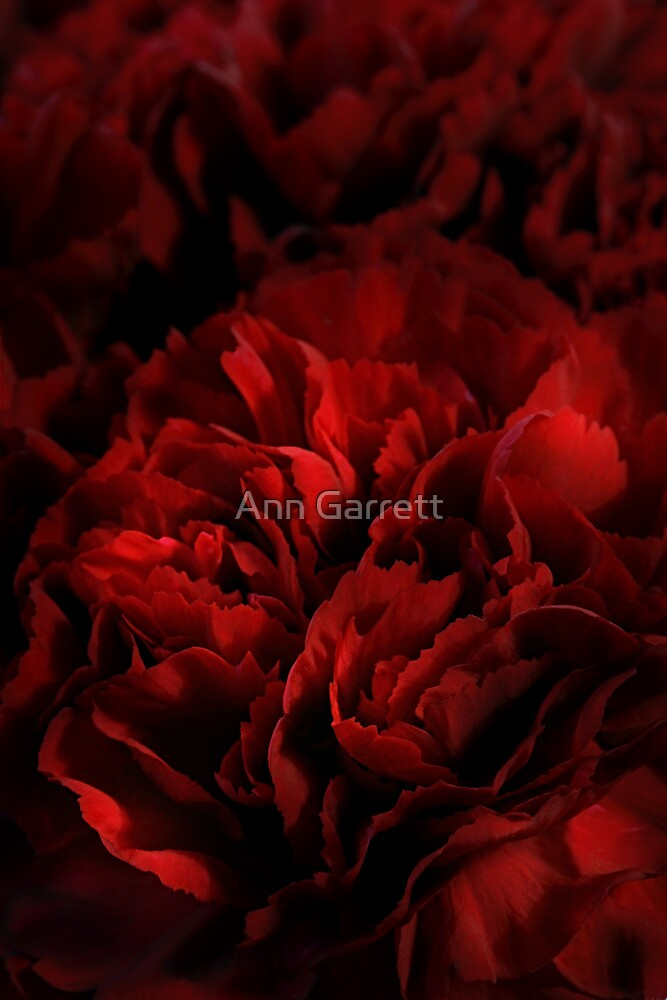 Red Carnations by Ann Garrett