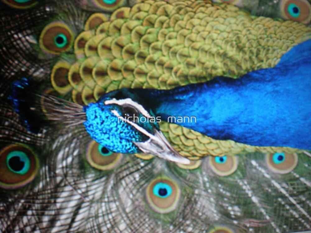 peacock by nicholas  mann