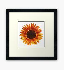 Sonnenblume Gerahmtes Wandbild
