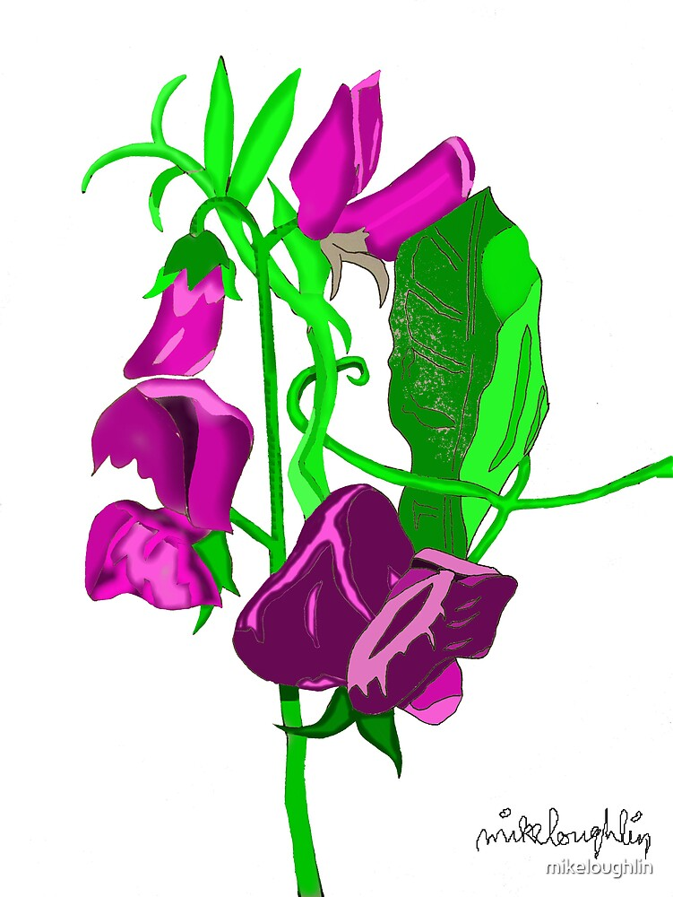 Lathyrus by mikeloughlin